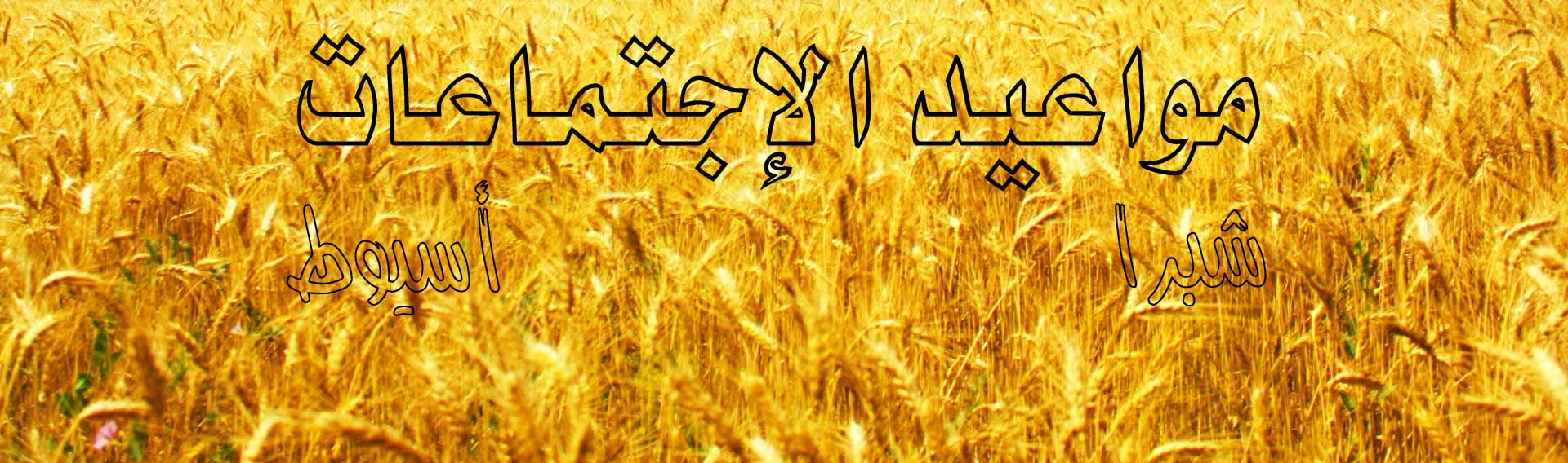 wheat-field-vector
